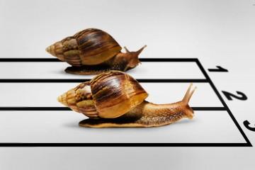 snail-race-22789-2560x1600